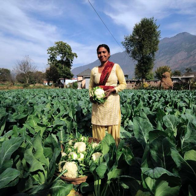 indian farmers Food tank speaks with sneh yadav, an indian farmer and food entrepreneur, about organic farming and india's food culture.